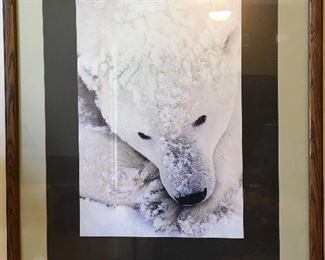 Art Wolfe Framed Polar Bear Poster