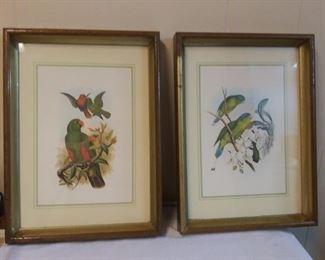 Italian Framed Bird Prints