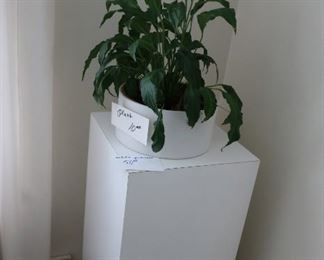 pedestal and  plant
