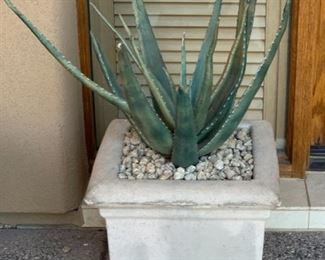 Cast Stone Square Plater/Pot w/ Agave	16 x18x18in	HxWxD	19630