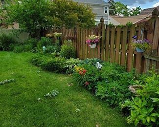 Perennials when in bloom earlier