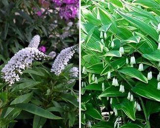 Perennials when in peak bloom