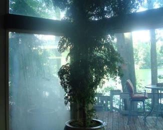 Large 8 ft.plant.