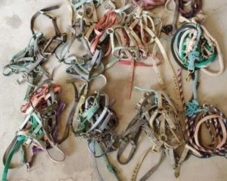 453	  Large Lot of Webbed Halters and Lead Ropes too many to count !! Large Lot of Webbed Halters and Lead Ropes Too many to count !!