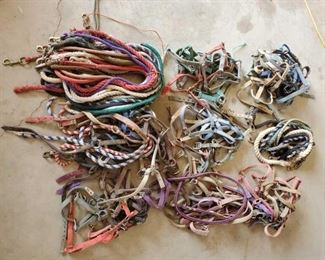 454	  Large Lot of Webbed Halters and Lead Ropes Large Lot of Webbed Halters and Lead Ropes Too many to count !!