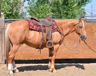 "Lot 19: ""Ronald McDonald"" 1150 lb Palomino Grade Gelding. He is 14.3.  He is 14+ in years. He is a nice yellow gelding that is ready to walk out at the lead spot. He climbs hills, goes through lakes and wherever you want him to go. Has some go so there is no work to riding him. He is has never taken a bad step. Our grand daughter gave him his name and was her go to horse. Will load up into any stock trailer. Not cinchy and bridles nice. Easy to shoe."