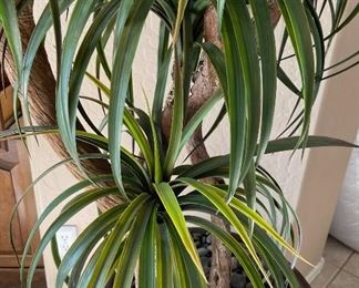 Faux indoor Plant106x30x30inHxWxD
