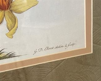 #2 Framed Botanical Print GD Ehret Delin & Sculp33.5x26.5in
