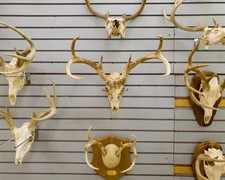 Deer skull antler mounts