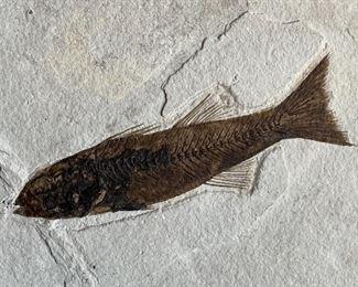 Fish Fossil6.25x7.25x.75inHxWxD