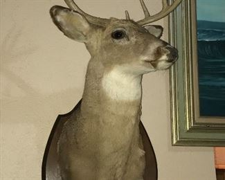 10 POINT WHITE TAIL DEER TAXIDERMY