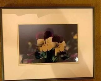 Framed Pansy Photos!