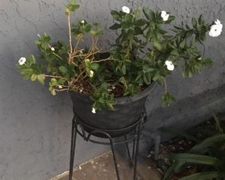 plant, plant stand