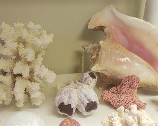 shells, coral