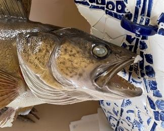 Large Trout Taxidermy 29 in long some damage as is29in longTotal length & width 73in X 39in