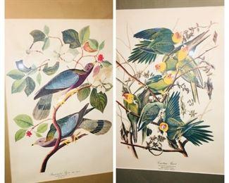 Pair of fine framed Audubon prints. gorgeous!!