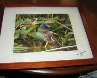 bird picture
