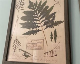 BOTANICAL ART, REPRODUCTION OF 1927