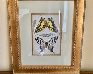"""$125 - Vintage butterfly hand colored print - 13"""" H x 11"""" W."""