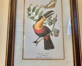 """$250 - Hand colored Toucan print  in custom frame with crackle mat - French early 20th century 25.5"""" H x 19"""" W."""