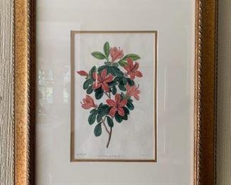 $125 - J. Ridgeway #2  Framed and matted botanical print