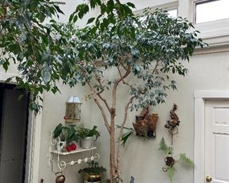 """Lot 95: $250- Live ficus tree """"Mother"""""""