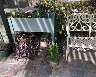Lots of succulents and outside potting bench