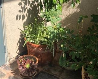 More potted plants