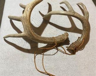 Five Point Deer Antlers Hunting Rattlers. $40