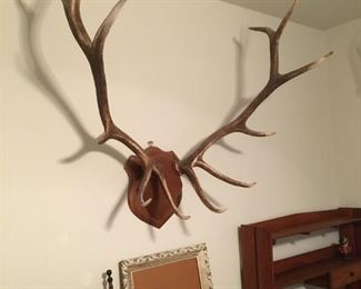 Elk horns