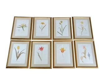 Framed Botanicals, Set of 8