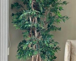 """$25.00......................78"""" tall Silk Tree (H385)"""