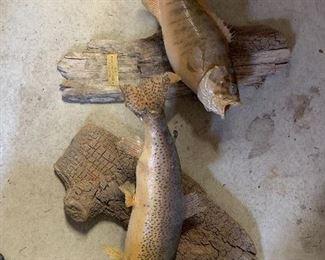 Mounted Fish Decor