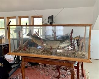 Very Large Custom Walleye Taxidermy Fish Mount Display! Can be used for a coffee table or as a conversation piece.