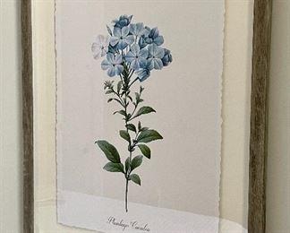 "Item 26:  Plumbago Caerulea Botanical Print - 16"" x 20"":  $65 ea"