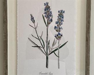 "Item 76:  Lavandula Spica Botanical Print - 16"" x 20"":  $65 ea"