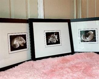 """Item 123:  (3) Crate & Barrel Shell Prints - 23"""" x 19"""": $135 each"""