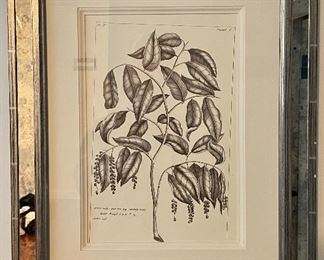 "Item 147:  Framed Botanical Print - 16.75"" x 21"":  $75"