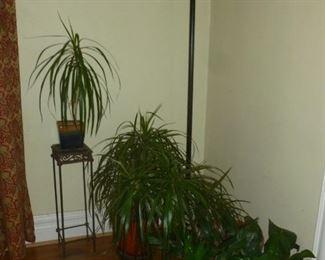 Art glass floor lamp..house plants