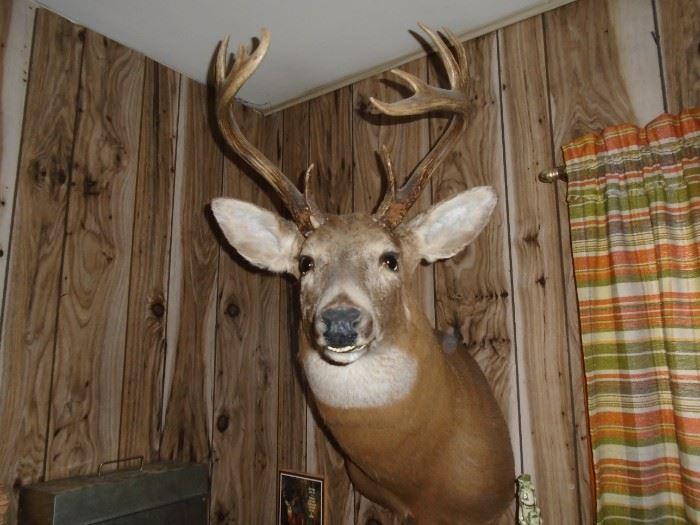 Texas buck