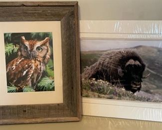 $8.00....................Wildlife Pictures (B153)