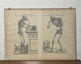 MEMENTO MORI SKELETON PRINTS | Pages from a book, And. Vesaliideceoporis, Humani Fabrica Liveri; 12 x 16-1/2 in. (mounted under glass)
