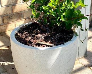 """5-Ceramic pot with plant 13""""H x 15""""W $35"""