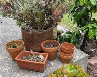 Succulent and Small Pot Lot