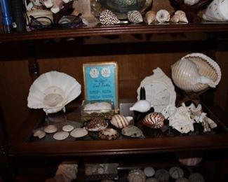 More shells