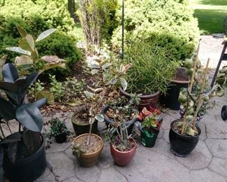 Many plants for sale