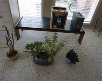 plants, bench