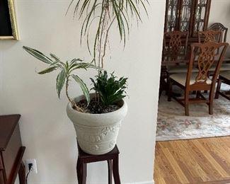 . . . more live plants