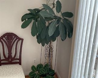 . . . another beautiful plant -- somebody's got a green thumb!