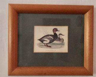 "$35 Framed red crested whistling  ducks.  9.75"" H x 11.75"" W."